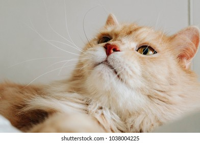 cat is looking something