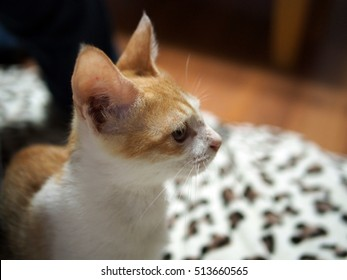 The cat looking at something
