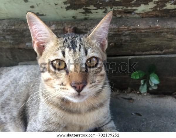 Cat looking something.