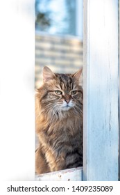 Cat looking through a hole in a fence