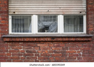 Cat looking through the window