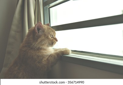 Cat looking through a window with curious expression. Image edited with lightness effect to create mood.