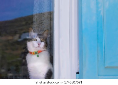 Cat looking through window.  Kitty indoors on window sill sitting with background reflection of nature in window.