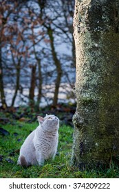 A cat is looking up the tree
