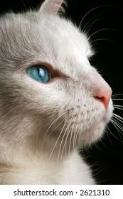 Cat Looking Upward, Curious Kitty