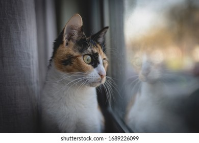Cat looking at the window