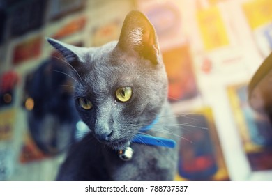 Cat is looking.Yellow eyes.selective focus.