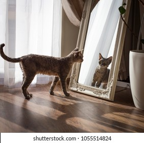 the cat looks at herself in the mirror and is very surprised