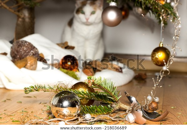 A cat looks innocent at broken christmas decoration