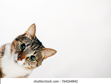 cat looks out, cat on white background peeks around corner