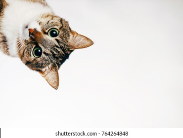 cat looks out, cat on white background peeks around the corner