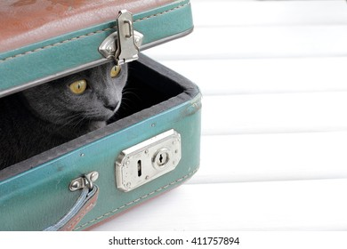 Cat looks out of a retro suitcase/Cat retro tourist