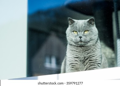 A cat looks out from the window