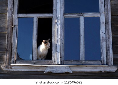 The cat looks at the street from the broken window of a wooden house.