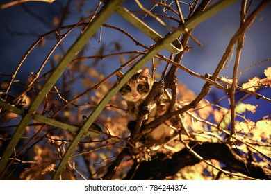 A cat looks from the tree.