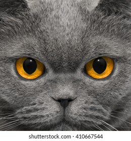 Cat looks very strange look in the night