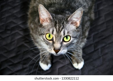 b6f33b4a2f Cat looks you in the eye with a dumb question. Request a pet in the