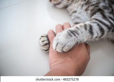 Cat love By the hand grip at hand.