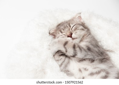 Cat love Sleep well By the Soft Mattress . Little scottish fold Cat cute ginger kitten happy and lovely comfortable sleeping . love to animals pet concept .