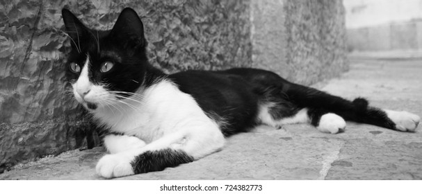 Cat lying down in a street of Kotor old town, Montenegro. Black and white photo