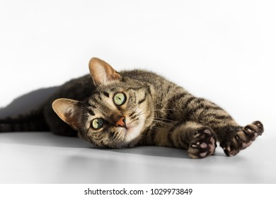 Cat lying down and stretching on white bckground