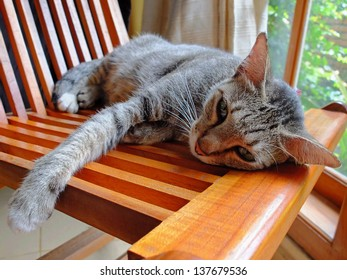 Cat lying at home on a wooden chair.