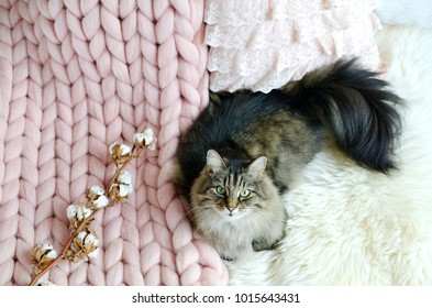 Cat Lying on Bed Giant Plaid Blanket Fur Bedroom, Winter Vibe,s Cosiness, Relax