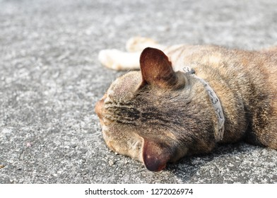 The cat is lying on the cement floor during the day.