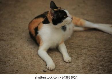 Cat lying on the floor