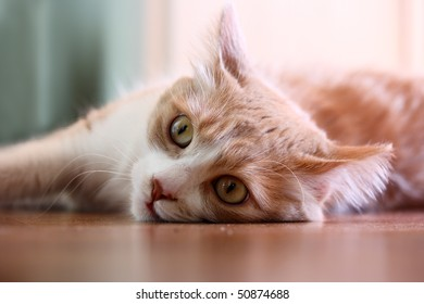 Cat lying on an floor. It is also an example of selective focus photography.