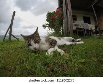 cat lying on grass
