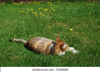 Cat lying on grass lawn