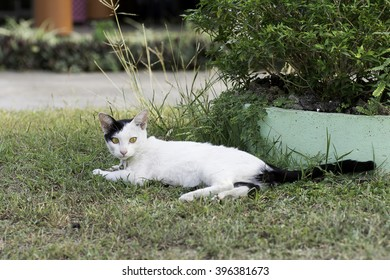 Cat lying on the grass and look at some things .