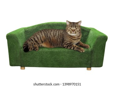 The cat is lying on the green divan. White background. Isolated.