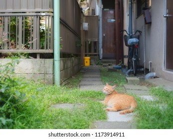A cat is lying on the ground in Tokyo Yanaka, Japan.