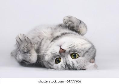 Cat lying on her back.