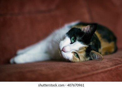 Cat lying on her side on a sofa.
