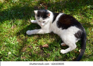 Cat lying on the lawn