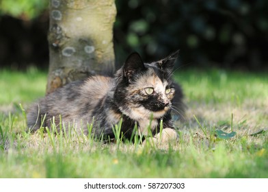 cat lying on meadow