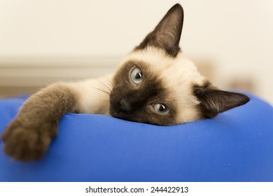 Cat lying on the pillow