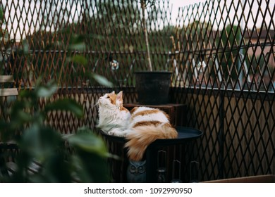 Cat lying on table on a balcony