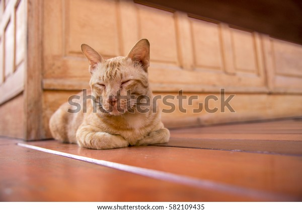 cat lying on the wooden floor in the background