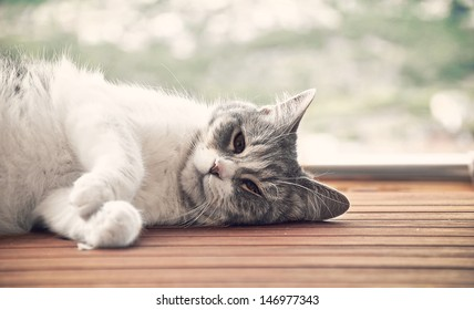 cat lying on a wooden platform while giving the sun