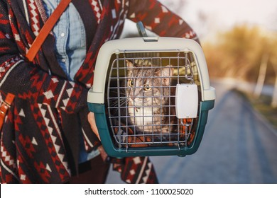 cat lying in plastic carrier outdoors