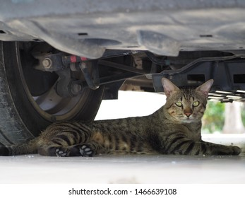 Cat are lying under the car.  Thai tiger patterned cat.