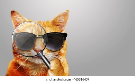 Cat with magnifier