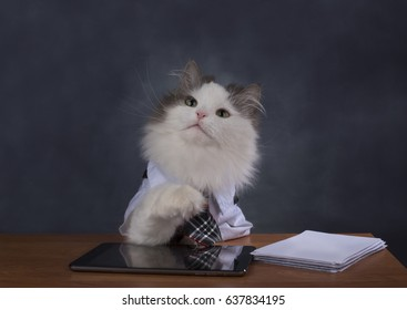 Cat manager misses the office