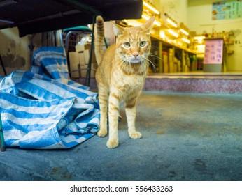 cat in market
