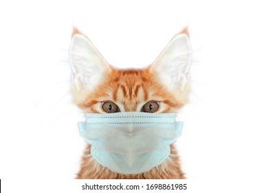 cat in mask save life from coronavirus