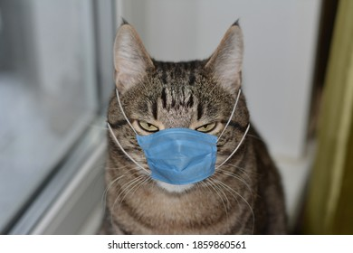 Cat in medical mask. Mask against covid-19